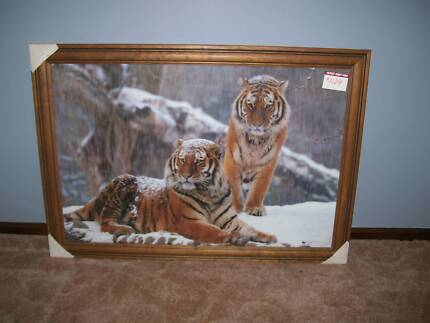 Framed Large Tiger paintings/photos/prints