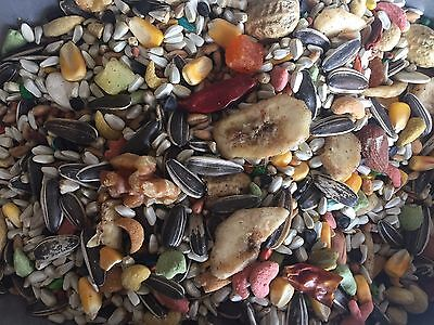 Independent's Choice Feed® bird seed Southeast Specialty Parrot w/ Nuts 10 lbs