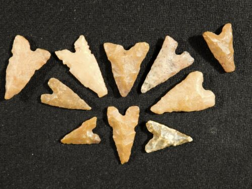 Big Lot of TEN! Ancient Neolithic Tidikelt Arrowheads 6.54