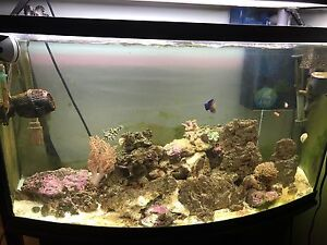 46 gal bow front Salt water complete setup
