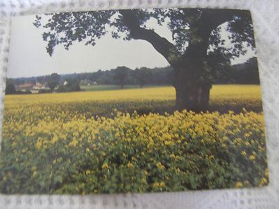 Postcard, Mustard Field in Flower, 1970s, Larkfield