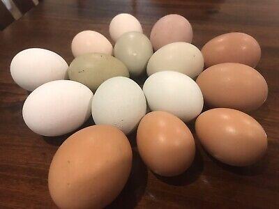 12  Barnyard Mix Hatching Eggs Rare Breeds Svart Honas Marans Rir Ayam