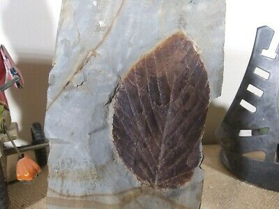 Fossilized Leaf