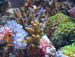 Reef-bg