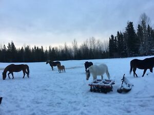 Wanted: horse lease  (Strathcona or Leduc or Camrose County )
