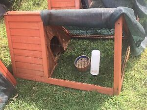 guinea pig Taree Greater Taree Area Preview