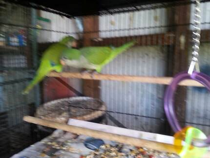 ALL MY BIRDS FOR SALE & AVIARIES Berkshire Park Penrith Area Preview