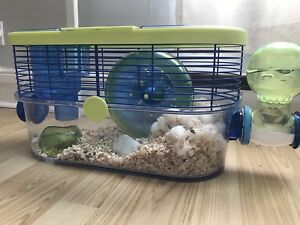 Hamster looking for a new home