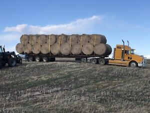 Canola Straw Bales Delivery Available