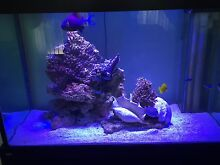 4ft Aquarium with over flow. 4X2X2.5/ 12mm Glass OPEN TO OFFERS Leichhardt Leichhardt Area Preview