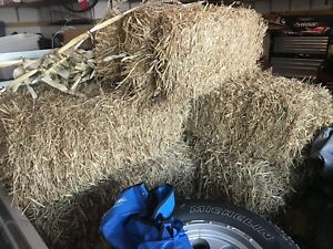 Free bales (bails?) of hay