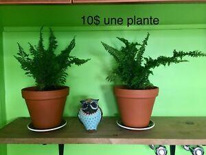 Belles plantes