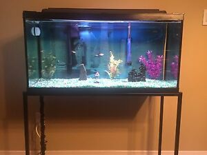 30 gallon Aquarium with stand and all accessories