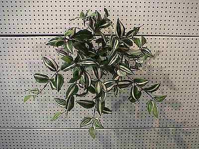 Efeu-Wanderer 40 cm künstliche pflanzen bäume blumen dekoration bäumen kakteen