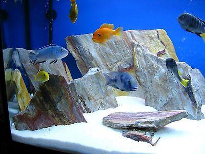 Aquarium Decor, Aquarium Fish Tanks UK
