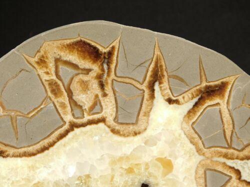 A Lighting Like Pattern! A BIG Polished SEPTARIAN Nodule SLICE From Utah 569gr