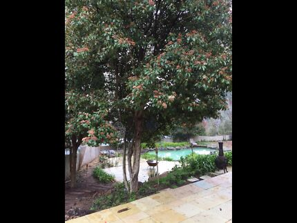 Room to rent Stirling Adelaide Hills Preview