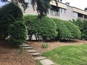 2 bedroom for rent in west coquitlam