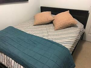 "Freedom ""Akiko"" bed - queen Chatswood Willoughby Area Preview"