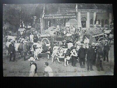 GENT - GAND  Concours Agricoles de 1908  , Admission des Bestiaux