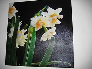Canvas Paint - Narcissus Holt Belconnen Area Preview