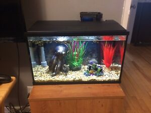 10gallon Fish Tank with everything