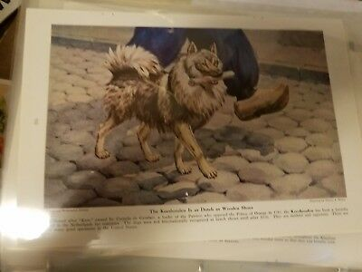 Walter A. Weber Norwegian Elkhound single bookplate 1943 National Geographic Mag