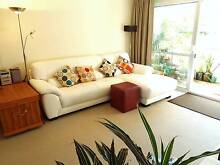 Chatswood Large 1 bedroom holiday unit fully furnished $750 p/wk Chatswood West Willoughby Area Preview