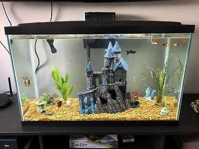 30 gallon fish tank with filter, heater, and everything seen in pictures