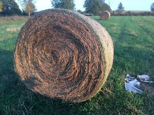 Net wrapped hay for sale