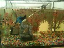 20 litre set up for tropical or coldwater fish Rockingham Rockingham Area Preview