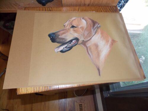 Golden Labrador Retriever Pastel Drawing Signed
