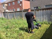 Lawn cutting overgrown grass weeds cutting 6477125231
