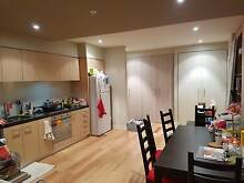 Looking for Friendly and Tidy Sharemate in CBD Apartment $150pw Melbourne CBD Melbourne City Preview