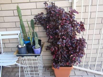 PLANT FOR SALE AT BECKENHAM