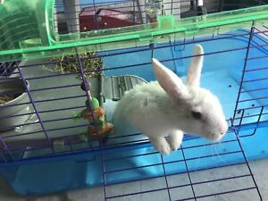 Bunny on sale !!