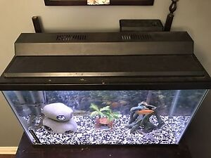 35 gl fish tank with ...