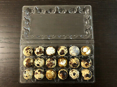 Lot Of 25 Plastic Quail Egg Cartons Holds 18 Eggs Clamshell Flat Top Tray