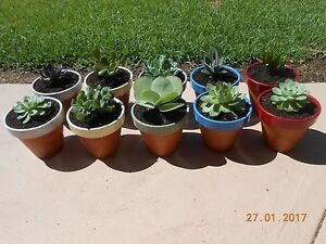 Plants Medowie Port Stephens Area Preview