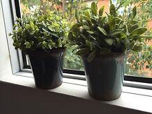 Leaving sale!FEJKA Artificial potted plant Mosman Mosman Area Preview
