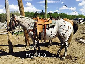 Horses for Sale