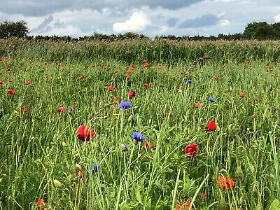 1kg Fab Meadow 80/20 - 400sqm coverage - Wildflower seed mixture - by Lawn UK