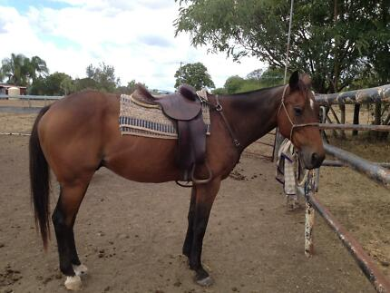 Mr Reliable for sale Mount Tarampa Somerset Area Preview