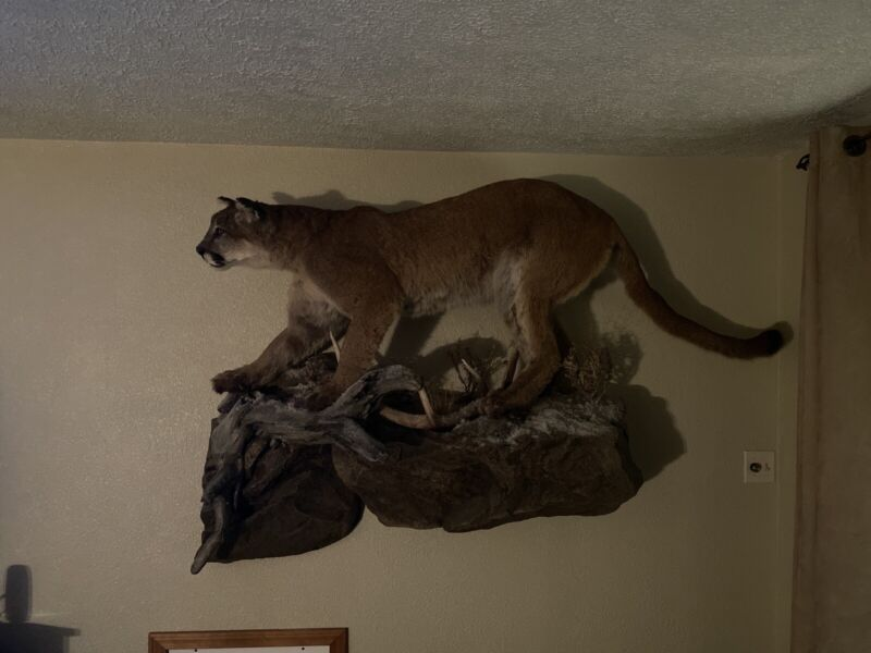 Life Size Taxidermy Mounts