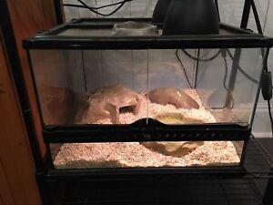 Plusieurs serpents avec leur terrariums
