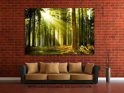 - Wall Art Canvas Picture Print - Pine Tree Forest - 3.2