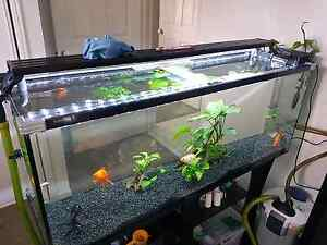 Looking for fish tank lids Redbank Plains Ipswich City Preview