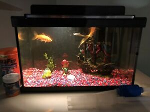 Aquarium, filtre et accessoires