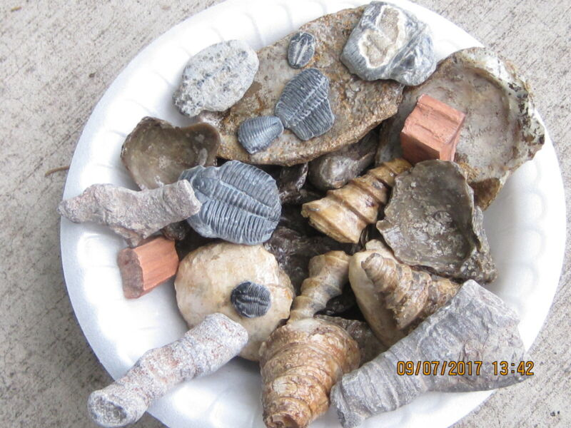 LOT OF 100 ASSORTED FOSSILS WHOLESALE