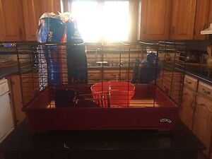 Guinea pig cage with shavings
